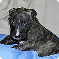 Adopt A Pet :: Hunter - Burr Ridge, IL