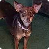 Adopt A Pet :: Halee - Columbus, OH