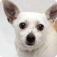 Adopt A Pet :: Bimini - Cumberland, MD