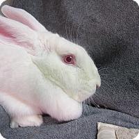 Adopt A Pet :: Brienne - Newport, DE