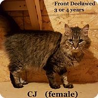 Adopt A Pet :: CJ - Bentonville, AR