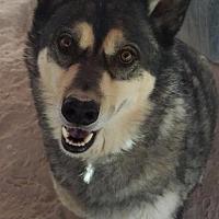 Adopt A Pet :: Ajay - Las Vegas, NV