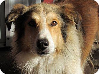 Collie Dog for adoption in Kiowa, Oklahoma - Colby