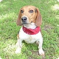 Adopt A Pet :: Palmer - Mocksville, NC