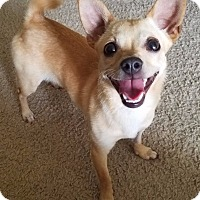 Adopt A Pet :: * AARF*- Ally - Detroit, MI