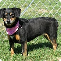 Adopt A Pet :: Maggie - Aurora, IL