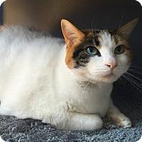 Adopt A Pet :: Kitty - Novato, CA
