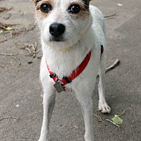 Adopt A Pet :: Terra - Westminster, CO