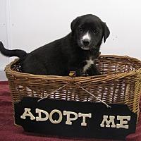 Adopt A Pet :: TInker - Oakland, AR