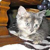 Adopt A Pet :: Taffy - Clearfield, UT