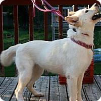 Adopt A Pet :: Mary Kate - Holland, MI