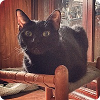 Adopt A Pet :: Poppin - Raleigh, NC