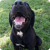 Adopt A Pet :: Kennedy - Westport, CT