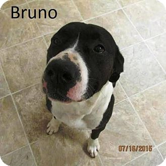 American Pit Bull Terrier Mix Dog for adoption in Crown Point, Indiana - Bruno
