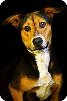 Shepherd (Unknown Type) Mix Dog for adoption in Fort Smith, Arkansas - Emma