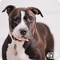 Adopt A Pet :: Hunk - Portland, OR