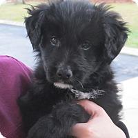 Adopt A Pet :: Manning - Allentown, PA