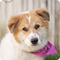 Adopt A Pet :: Peaches - Kingwood, TX