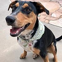 Adopt A Pet :: Leah - Albuquerque, NM