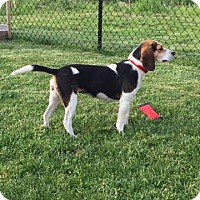Adopt A Pet :: Bella is Sweet and active!! - Lucknow, ON