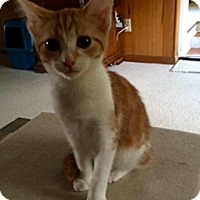 Adopt A Pet :: Jazzy - Chattanooga, TN