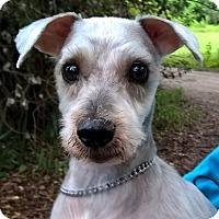 Adopt A Pet :: Bolt - Orlando, FL