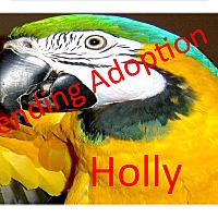 Adopt A Pet :: Holly The Blue and Gold Macaw - Vancouver, WA
