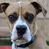 Adopt A Pet :: Gypsee - DeForest, WI