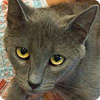 Adopt A Pet :: Addison - Sprakers, NY