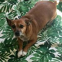 Adopt A Pet :: Taquin - Encino, CA