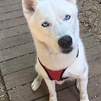 Adopt A Pet :: Thunder - Matawan, NJ