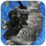 Photo 3 - Domestic Longhair Cat for adoption in Montreal, Quebec - Melany