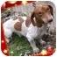 Photo 2 - Dachshund Dog for adoption in Harrisonburg, Virginia - Noodle