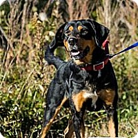 Adopt A Pet :: MoJo - Chilhowie, VA
