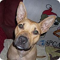 Adopt A Pet :: SARAH - Hollywood, FL