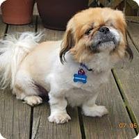 Adopt A Pet :: Charlie Bear - Richmond, VA