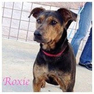 Terrier (Unknown Type, Medium) Mix Dog for adoption in Newnan, Georgia - Roxie