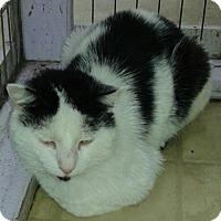 Adopt A Pet :: Skyler - Whittier, CA