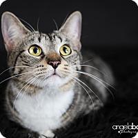 Adopt A Pet :: Sarah - Eagan, MN