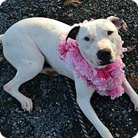 Adopt A Pet :: Marisol - Asheboro, NC