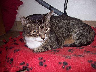 Domestic Shorthair Cat for adoption in Redwood Falls, Minnesota - Pearl