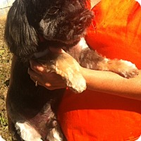 Adopt A Pet :: sparky - Northumberland, ON