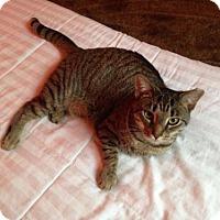Adopt A Pet :: MIMOSA - Ridgewood, NY