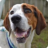 Adopt A Pet :: Scout - Charlotte, NC