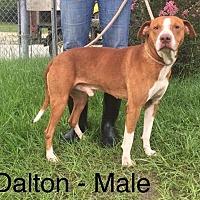Adopt A Pet :: Dalton - Waycross, GA