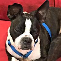 Adopt A Pet :: Pending Adoption BO-JACK - Greensboro, NC