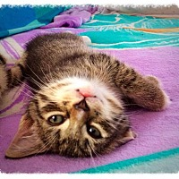 Adopt A Pet :: Tootsweets (COURTESY POST) - Baltimore, MD
