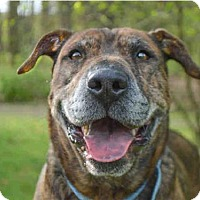 Adopt A Pet :: LIZZY - Pittsburgh, PA