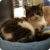 Adopt A Pet :: Mitzi - Byron Center, MI