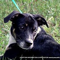 Adopt A Pet :: HENRY~13lbs - PRINCETON, KY